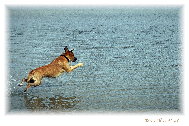 Übers_Meer-Hund