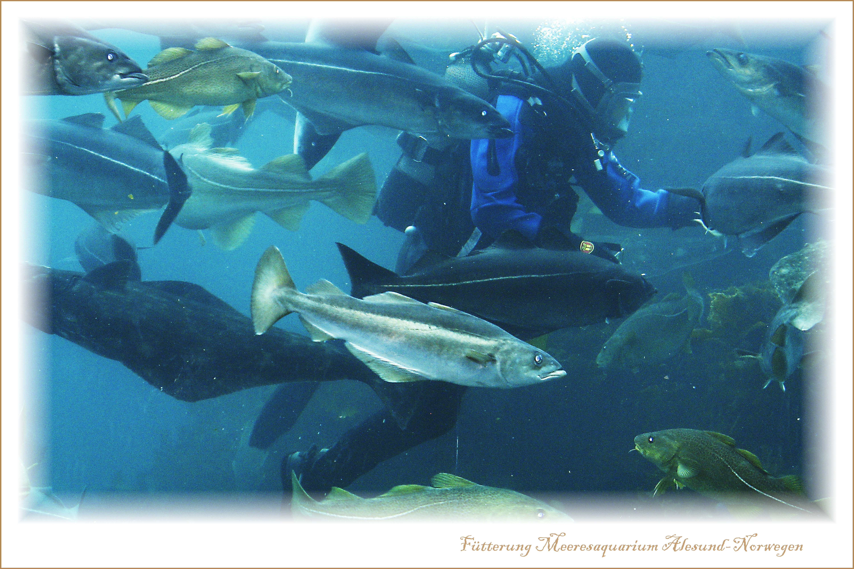 Meeresaquarium Alesund-Norwegen