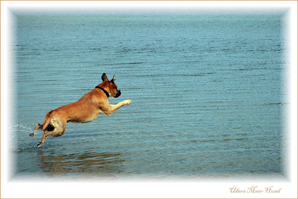 Übers-Meer-Hund