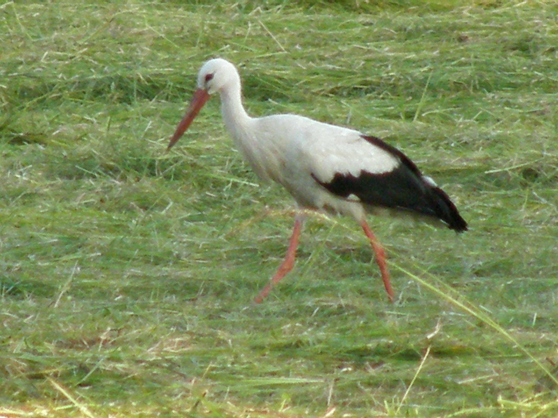 008Vögel