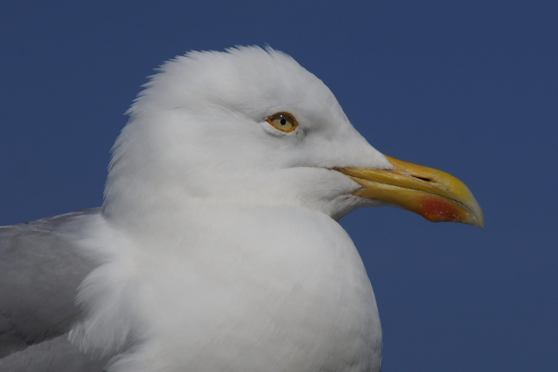 081Vögel