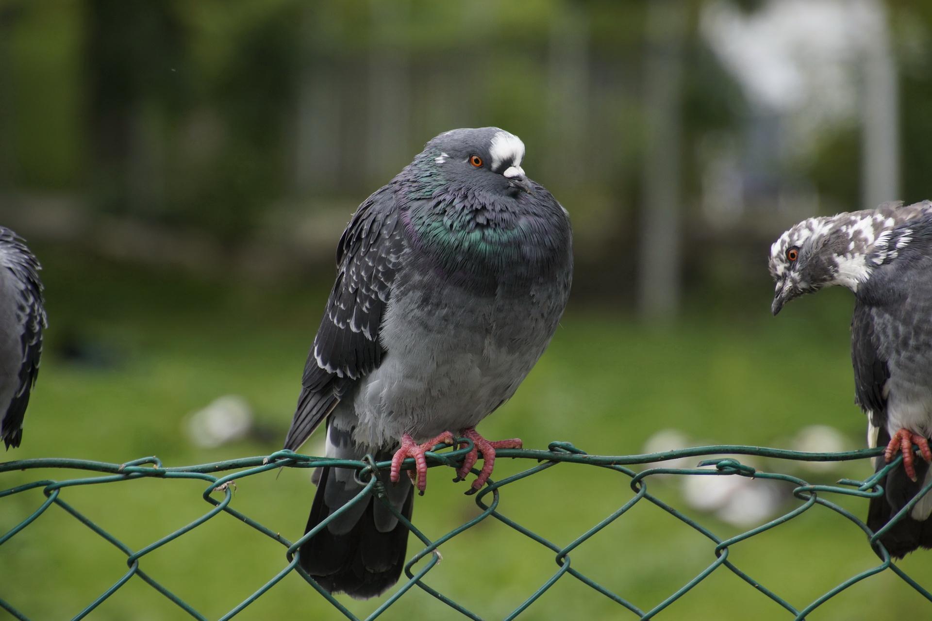 064Vögel