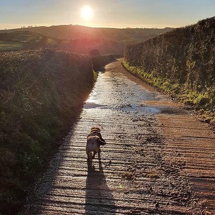 Stunning Dog Walks