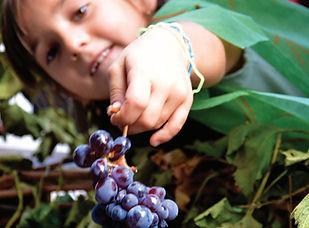 Festa dell' uva 2013 - Locandina