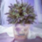Vendita fiori e piante artificiali a Prato