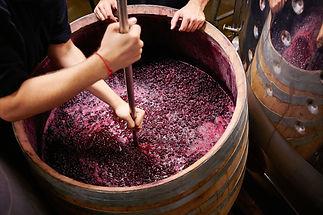 Negozio per accessori di vinificazione casalniga