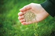 vendita sementi per il tuo orto prato