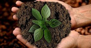 consulenza sulla salute delle tue piante a Prato