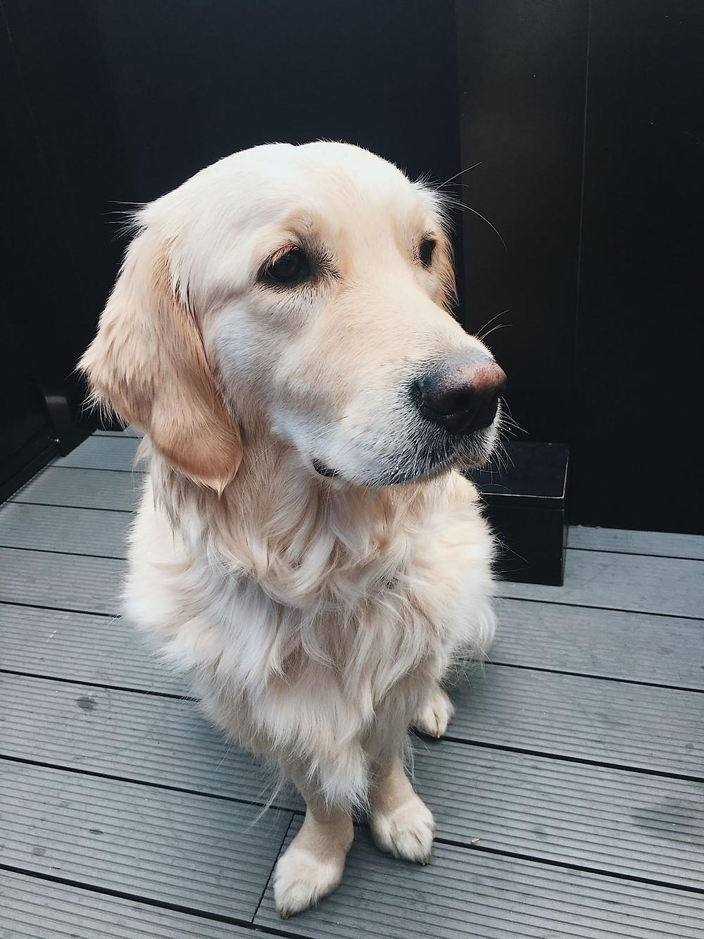 perro kanbun