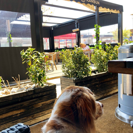 RESTAURANTE DOG-FRIENDLY