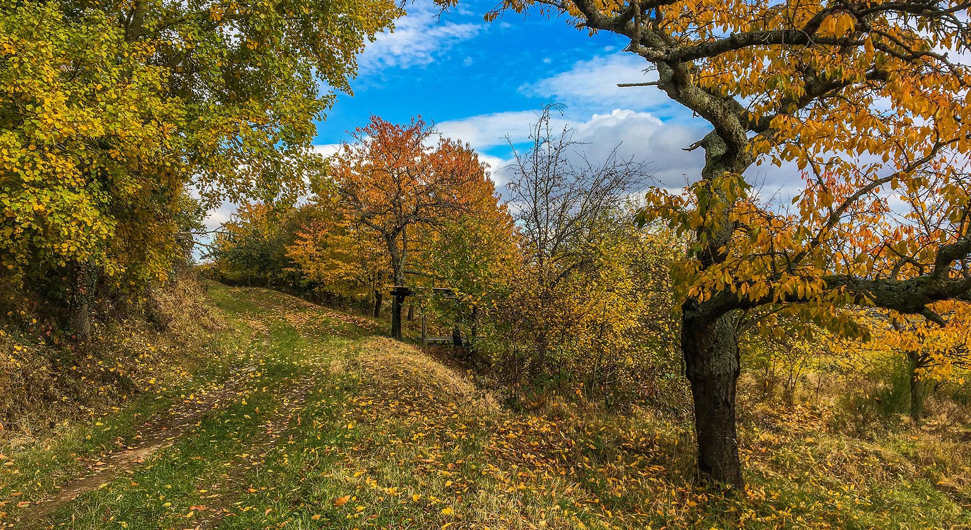Herbst_2016_iphone
