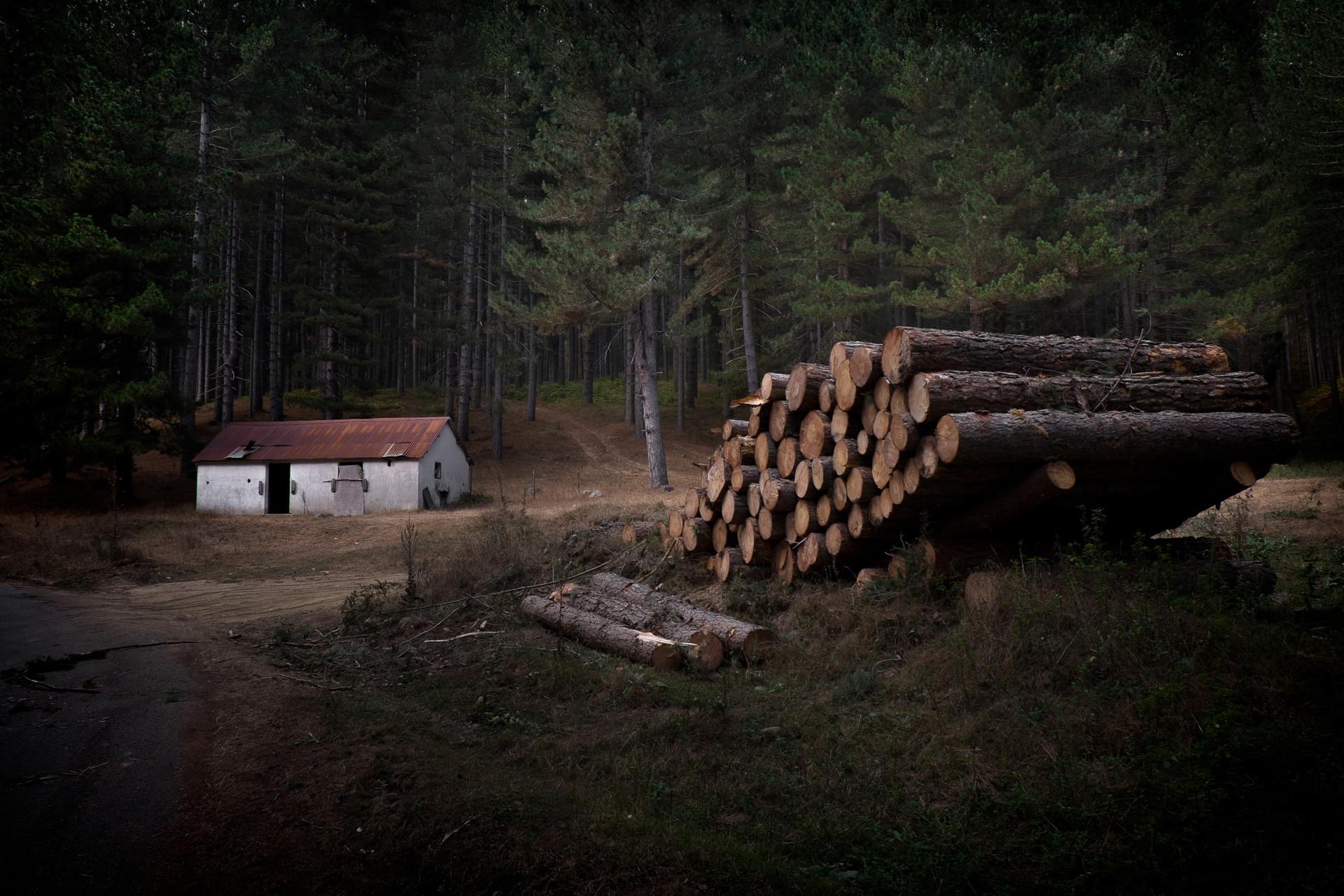 Woodshed