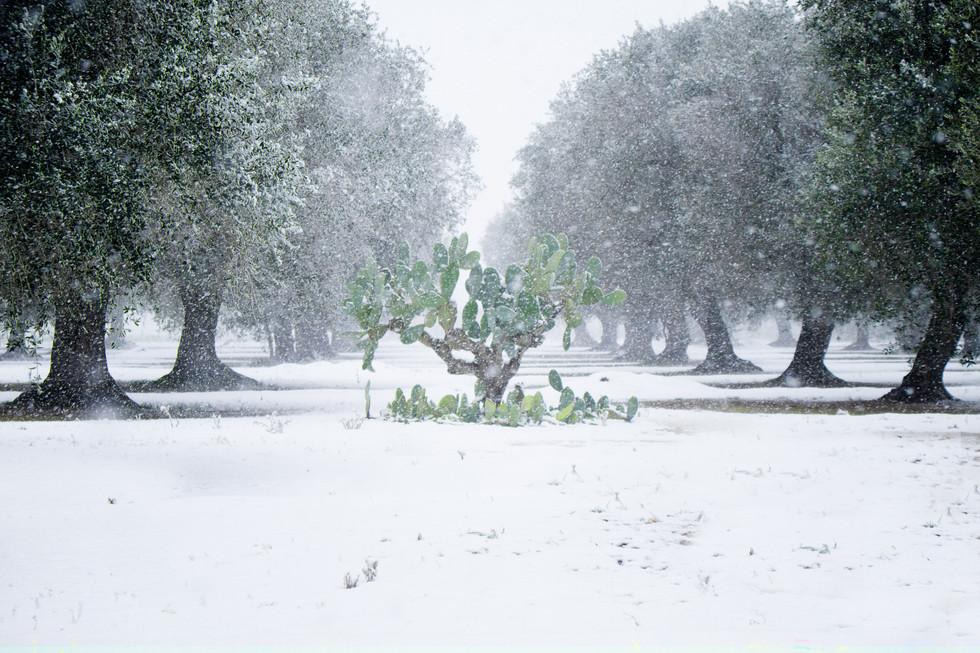 Neve in Salento
