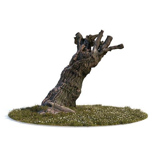 3Dscan 3D model old tree nature lawn grass stump forest stone rock wild natural vray 3D studio max fbx obj jpg