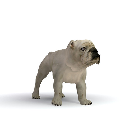 3D scan 3D model 3Dprint dog bulldog animal pet wild natural vray 3D studio max fbx obj jpg
