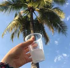 Latubaes una dulcebebida100% natural y típica de las regiones tropicales. Proviene de la palma de coco y se obtiene al cortar completamente el racimo de cocos justo antes de que las flores abran.