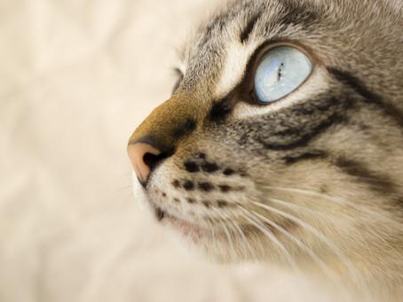 10 Consejos para cuidar a tu gato