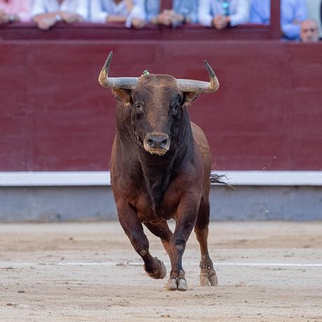 Núñez del Cuvillo