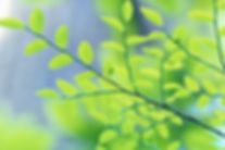 naturopath regina acupuncture: Dr. T. R. Mrazek, ND