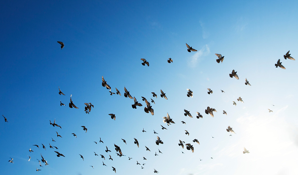 A flock of birds flying off in the sky