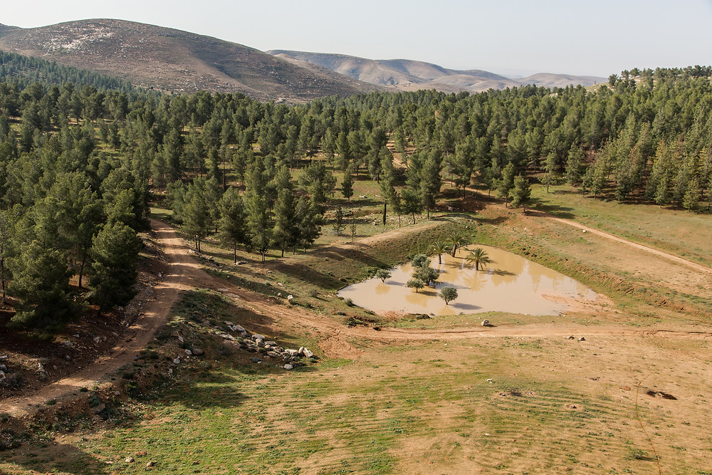A forest of trees and a small pond that was planted by the JNF