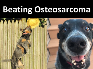 Beating Osteosarcoma: Maggie's Story