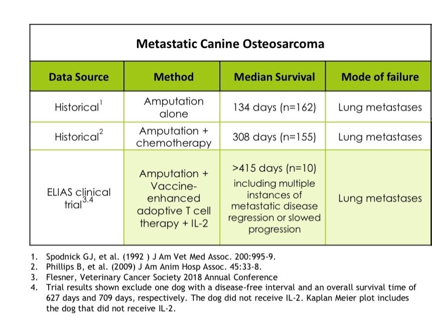 Table comparing median survival times for dogs who received immunotherapy vs amputation vs amputation plus chemotherapy