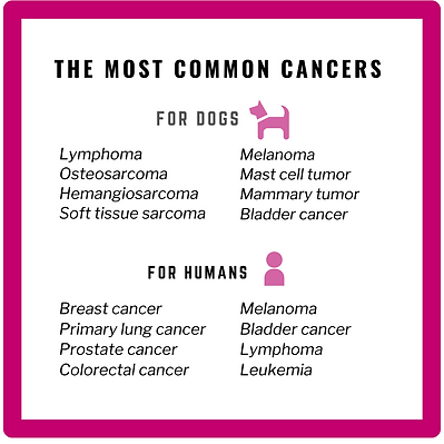 The most common cancers for dogs and humans