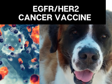 Yale's EGFR/HER2 Vaccine Helps Dogs With Metastasis?!