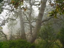 Green Mist Morning