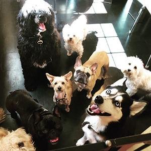 doggydaycare.JPG