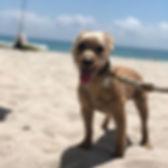 Life's a beach! 🐶❤️ #beachday #beachdog