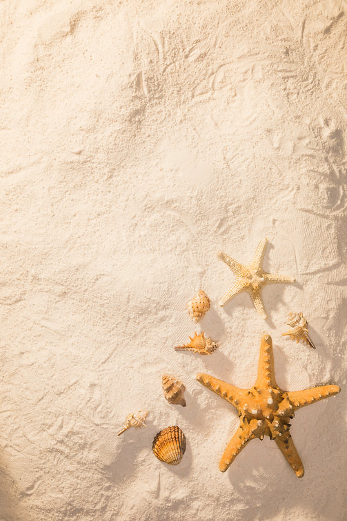 sand-with-dried-sea-creatures.jpg