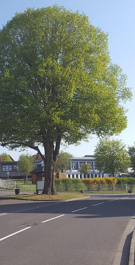 Schule mit Linde.jpg