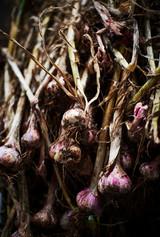 Organic Farming Feature