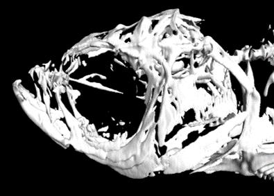 uCT head