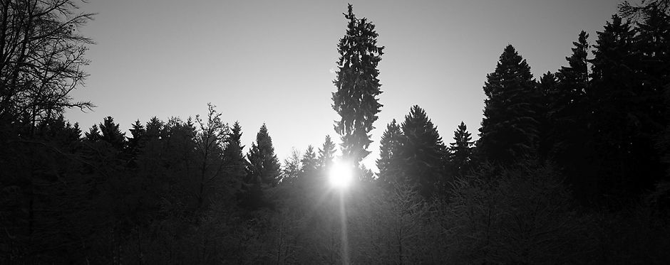 path to ladenburg_sw.jpg