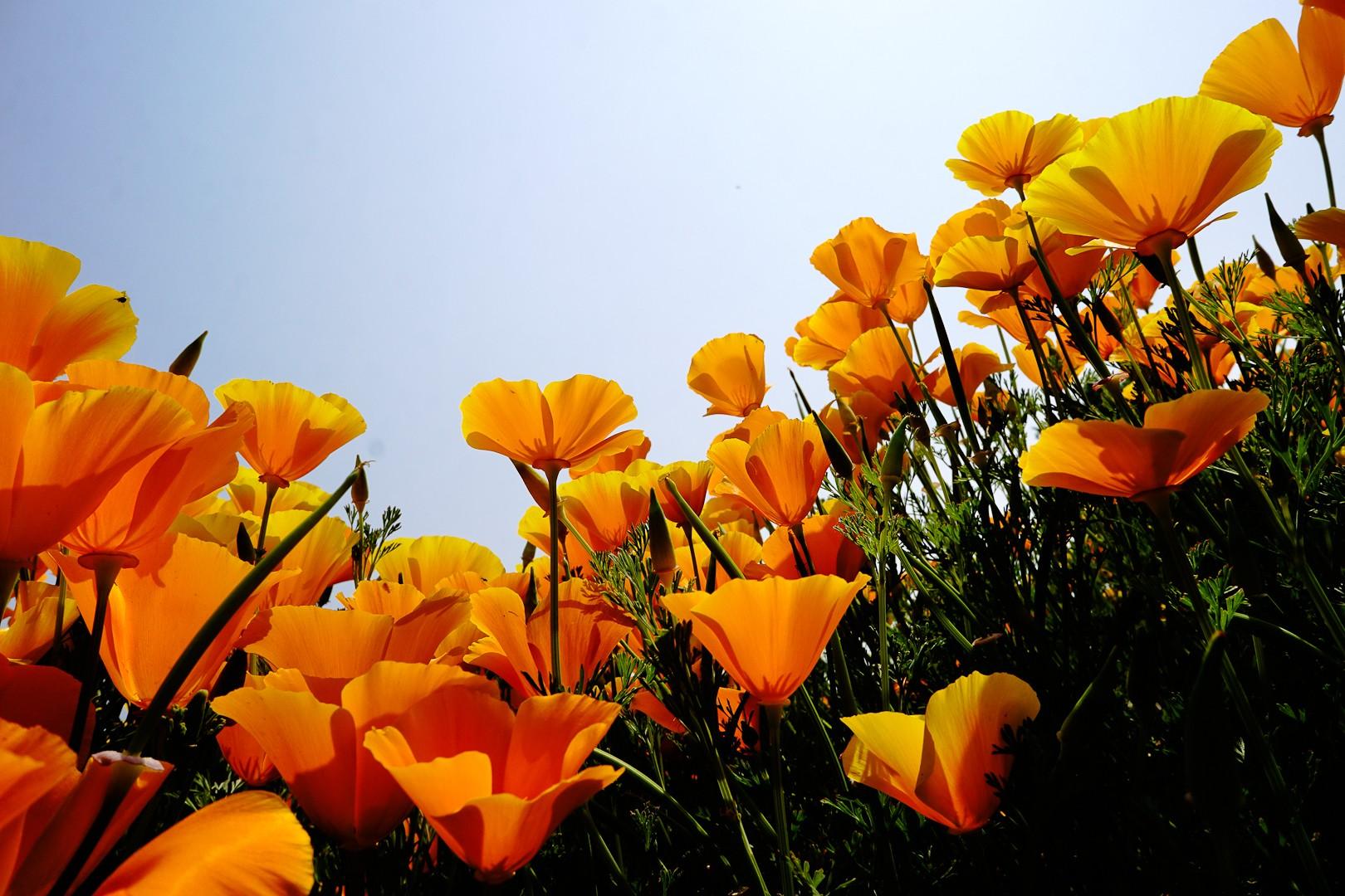 Srinagar wiosną.