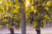 juli pinot noir.jpg