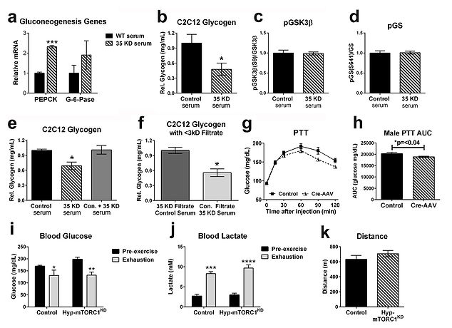 Figure 7 Hussong et al RxA hypothalamus