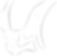 BIMF_CI_logo_white.png