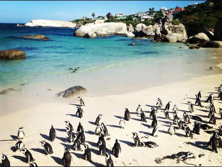 Les voyages Part 2 - Cape Town