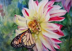 Dahlia Nectar