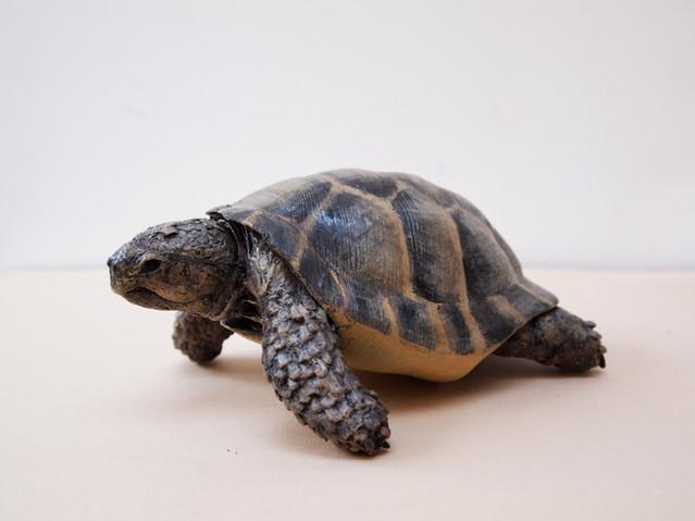 Life-sized Hermann's Tortoise Prop