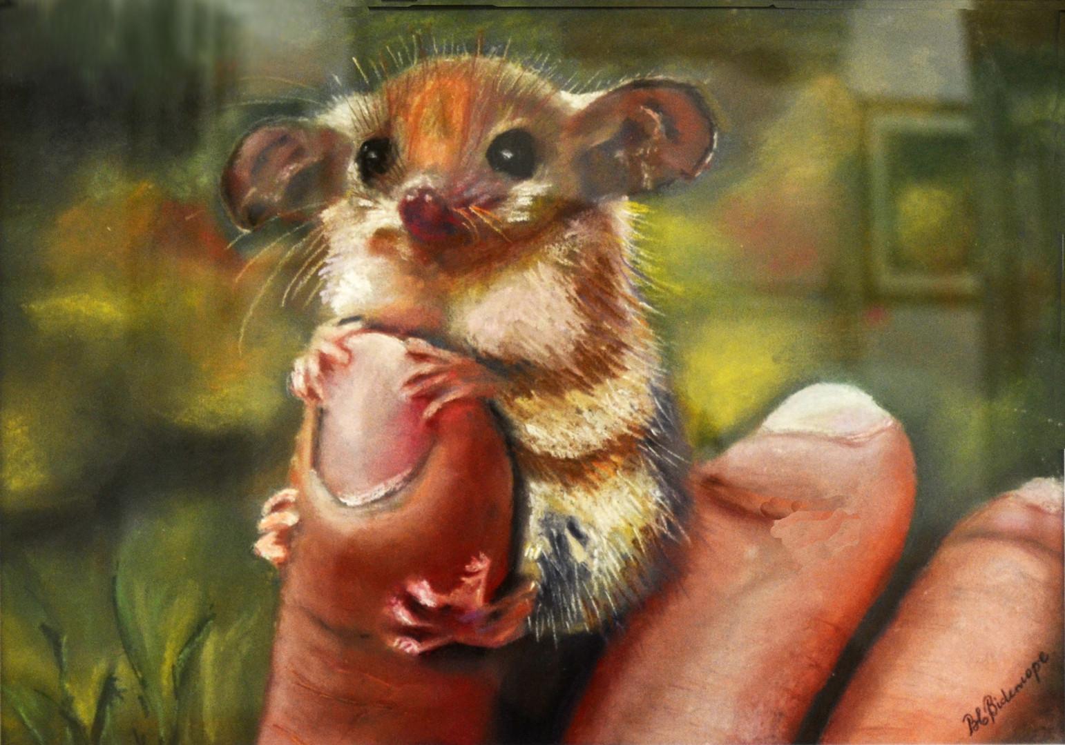 "2015 Janace Holmes Family Memorial Prize – Barbara Bidencope, Tamworth Nsw ""Petunia Possum"""