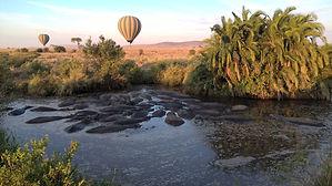 Sere balloon hippo.jpg