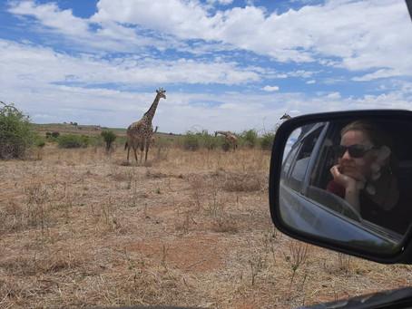 Top 3 tips to make a wildlife safari cheaper