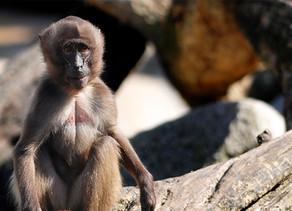 Gan HaChai – Petach Tikva Zoo