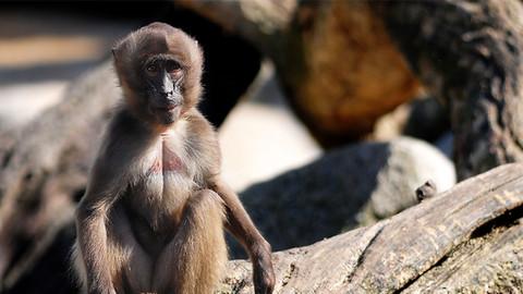 Monkey business?