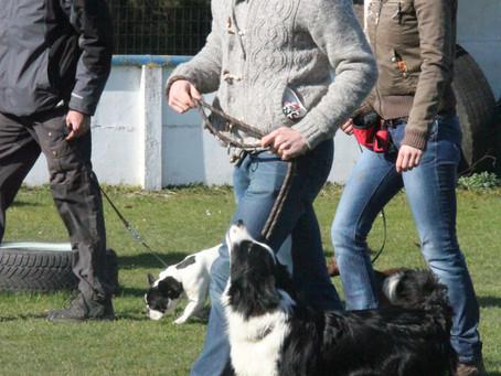 Pulling on leash